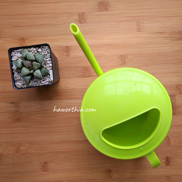 A watering can with a narrow spout gives more control of water.