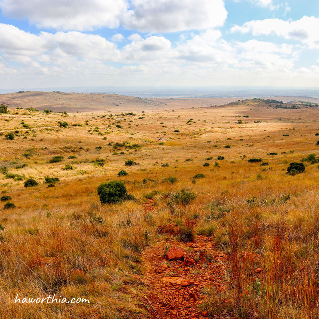 Grassland for miles at Suikerbosrand Nature Reserve